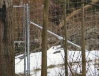 Deer Exclusion